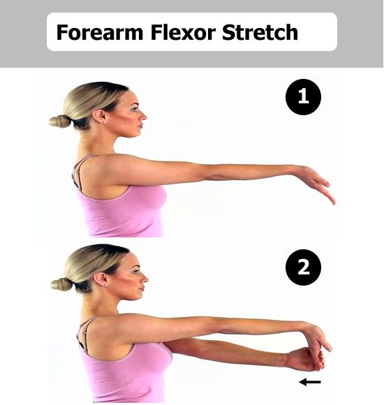 forearm flexor stretch