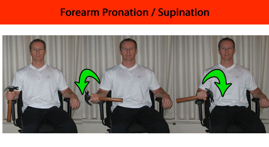 forearm pronation supination exercise