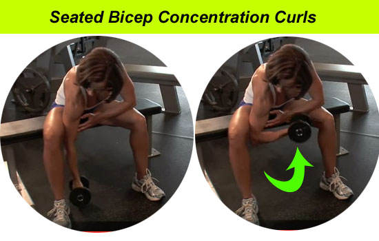 seated bicep curls